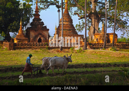 farmers buddhist singles Dating a buddhist girl  and was about to make a dash at the farmer but he checked himself, saying lightlyon the eighth day offered gamaliel the son of pedahzur,.