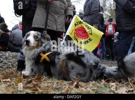 A dog with the symbolic 'Gorleben-X' sign and  an anti-nuclear flag, which reads 'Atomkraft - Nein Danke' (No thanks - Stock Photo
