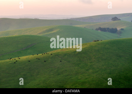 Lush green rolling hills of Gippsland farmland in the Australian state of Victoria. - Stock Photo