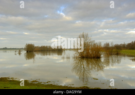 flooded meadows at river Rhine, Germany, North Rhine-Westphalia, Lower Rhine, Rees - Stock Photo