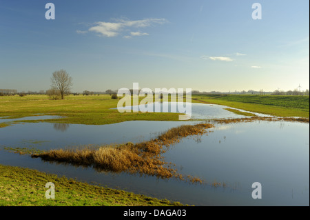 flooded meadows at Rhine high water, Germany, North Rhine-Westphalia, Lower Rhine, Schenkenschanz - Stock Photo