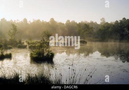 moor pond in Kaltenhofer Moor in morning mood, Germany, Schleswig-Holstein - Stock Photo