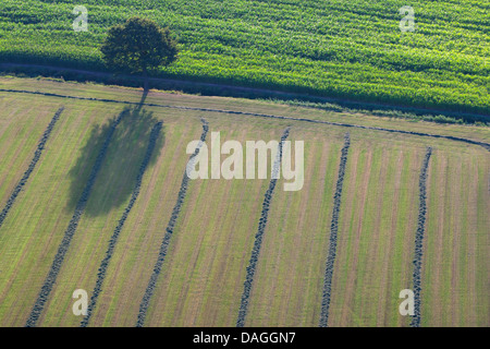 agricultural area with fields, grasslands and single tree from the air in spring, Belgium, Kempen - Stock Photo