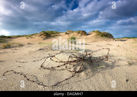 rusty barbed wire on sand dune of De Westhoek nature reserve, Belgium - Stock Photo