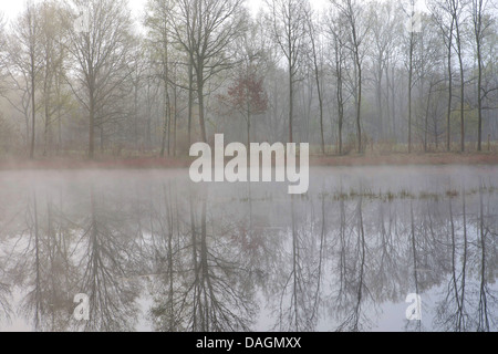 lake in fog, Belgium, Turnhout - Stock Photo
