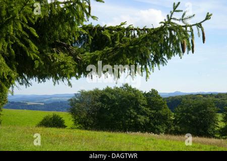 Eifel landscape, Nuerburg in background, Germany, Rhineland-Palatinate, Hohe Eifel, Leudersdorf - Stock Photo