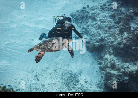 Scuba diver interacting with a sea turtle - Stock Photo