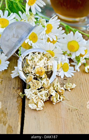 Metal strainer with dried chamomile, a bouquet of fresh flowers chamomile, tea in a glass cup on a background of - Stock Photo