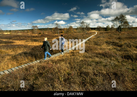 wood way in the High Fens, Belgium, Wallonie, Ardennes, Hohe Venn - Stock Photo