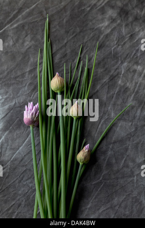 Flowering chives and parsley on textile, close up - Stock Photo