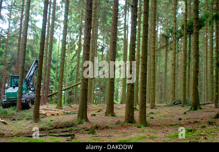 Norway spruce (Picea abies), harvester lumbering in spruce forest, Germany, North Rhine-Westphalia, Bergisches Land - Stock Photo