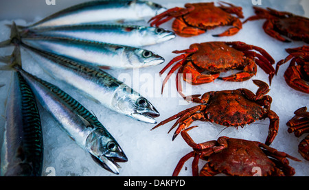 Crab legs eat food seafood luxury expensive cook brown for Expensive fish to eat