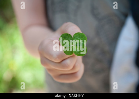 four-leafed clover (Oxalis tetraphylla, Oxalis deppei), in the hand, Germany - Stock Photo
