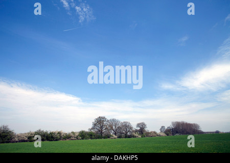 blue sky and cirrus clouds above a meadow in april, Germany - Stock Photo