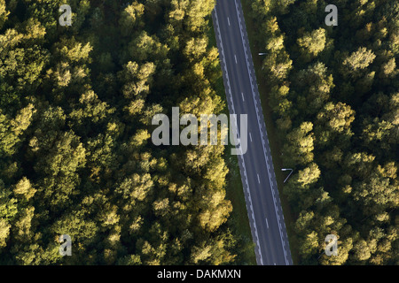 aerial view to street crossing a forest, Belgium - Stock Photo