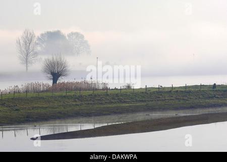 riverside along the Waal, Netherlands, South Holland, Lexmond - Stock Photo