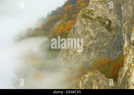 autumn forest and rocks along Maas river in morning mist, Belgium, Ardennes, Dinant - Stock Photo