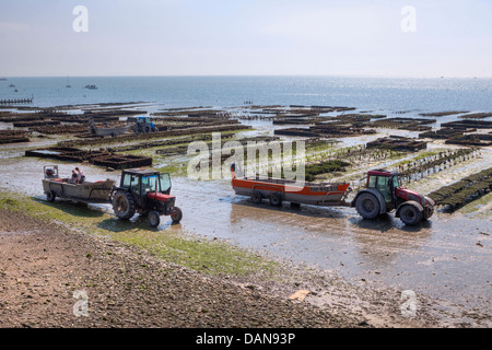 oyster farming in Cancale, Brittany, France - Stock Photo