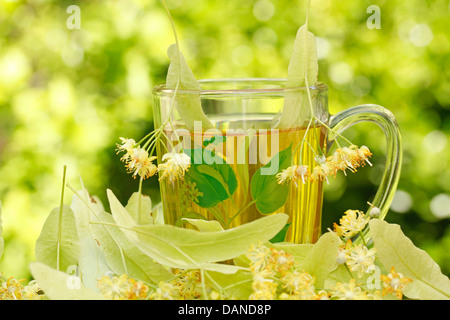 Common lime or linden tree infusion (Tilia platiphyllos or cordata) - Stock Photo
