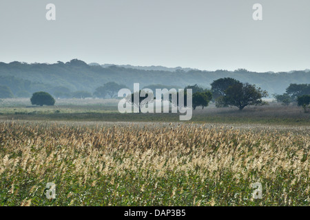 Reeds at Lake Xingute, Maputo Special Reserve, Mozambique - Stock Photo