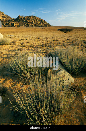 Arid landscape in the Iona NP. in Angola. - Stock Photo