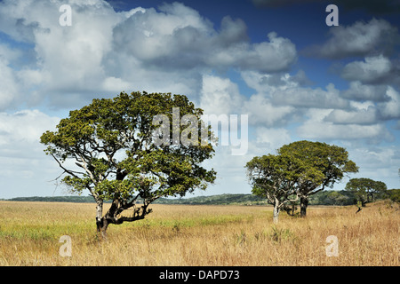 Tree in a marsh in the Maputo Special Reserve, Mozambique - Stock Photo