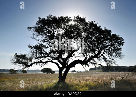 A backlit tree in the Maputo Special Reserve, Mozambique - Stock Photo