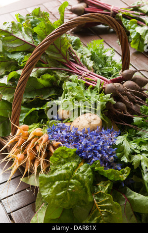 Freshly picked beetroot, carrots, potatoes and spinach in wicker basket Ampney Park, 17th century English country - Stock Photo