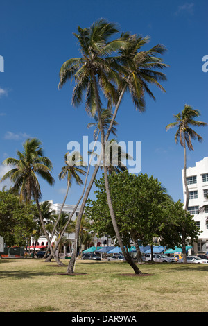 CROSSED PALM TREES LUMMUS PARK OCEAN DRIVE SOUTH BEACH MIAMI BEACH FLORIDA USA - Stock Photo