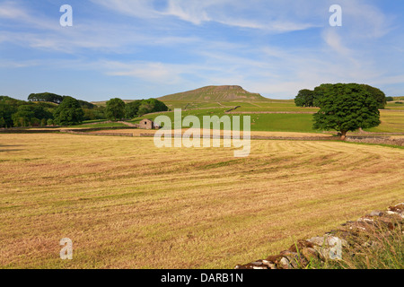 Fields below Pen-y-ghent on the Pennine Way, Horton in Ribblesdale, North Yorkshire, Yorkshire Dales National Park, - Stock Photo