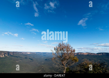 A native tree with views over the Jamison Valley, at Sublime Point, Blue Mountains, Australia - Stock Photo