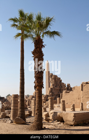 Palm tree as central object in front of Hatshepsuts Obelisk at The Temple of Amun at Karnak, Luxor Egypt - Stock Photo