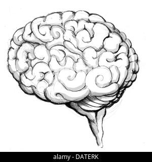Human Brain Drawing - Stock Photo