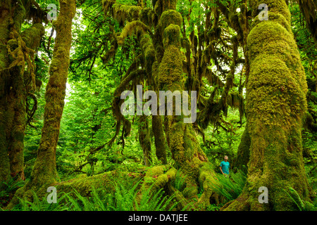 Walking among the giant moss-covered trees at the Hoh Rain Forest in Olympic National Park in Washington State, - Stock Photo