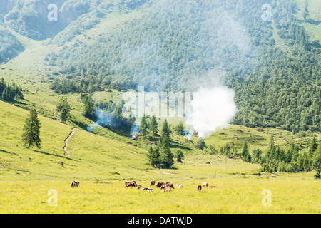 Picture of a landscape in Alps, Austria, with meadow, trees, cows and wild fire - Stock Photo