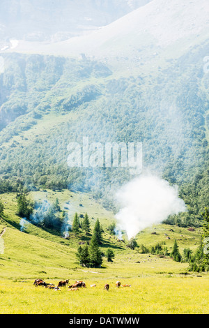 Alps in Austria, with cows, wild fire, meadow and trees - Stock Photo