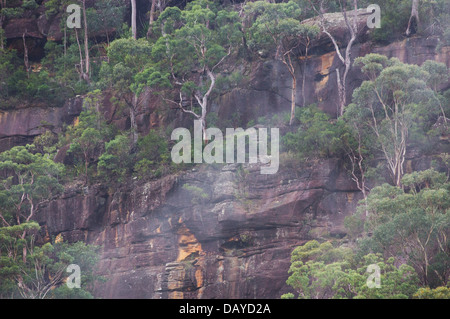 Eucalyptus and other bushland trees growing on a steep sandstone escarpment in Dharug National Park, NSW, Australia - Stock Photo