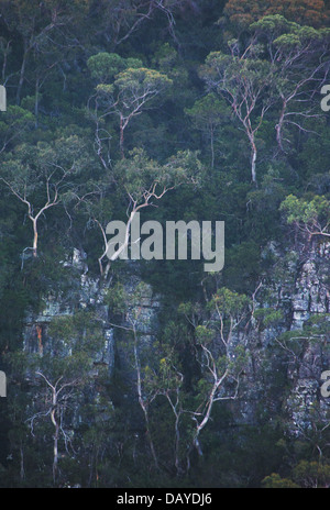 View of trees and bushland growing on a steep sandstone gorge in Kanangra Boyd National Park, NSW, Australia - Stock Photo