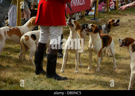 Alcester, Warwickshire. 21st July, 2013. Hounds in the ring at at the CLA Game Fair, Ragley Hall, Alcester, Warwickshire, - Stock Photo