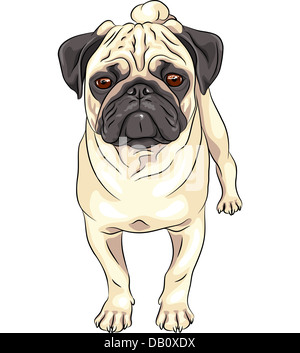 color sketch cute serious dog fawn pug breed - Stock Photo