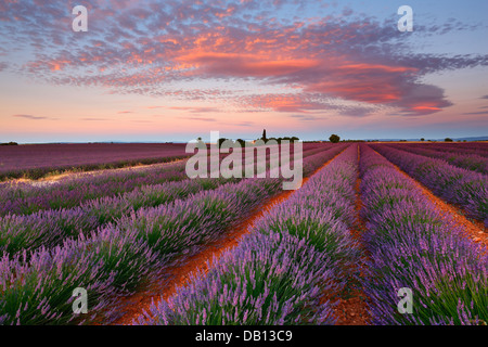 Sunrise with beautiful clouds over lavender field, Provence - France - Stock Photo