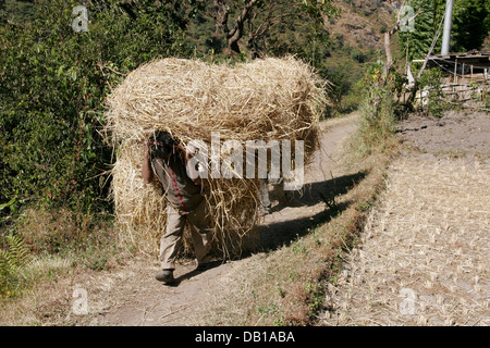 Local man carrying grass on his back, Annapurna Conservation Area, Annapurna Circuit, Nepal - Stock Photo