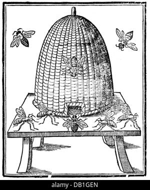 zoology / animals, insects, bee, honey bee (Apis mellifera), beekeeping, beehive, woodcut, title page, out of: Thomas - Stock Photo