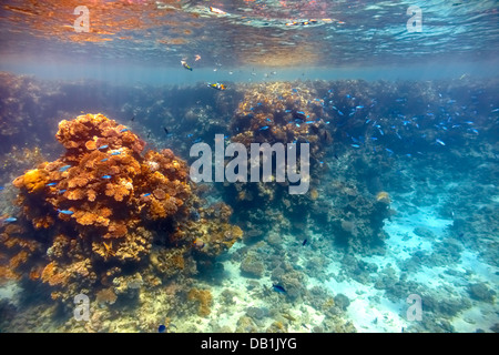 Coral reef in Red sea... - Stock Photo