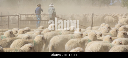 Farmers with a mob of merino sheep in a dusty pen in outback Queensland, Australia - Stock Photo