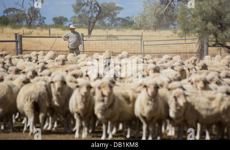 Farmer with a large flock of merino sheep in the dry, dusty outback of Queensland, Australia - Stock Photo