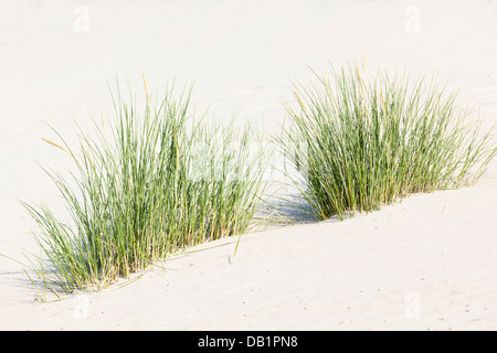 Some tufts of grass growing on a sand dune at the North Sea in Norderney, Germany. - Stock Photo