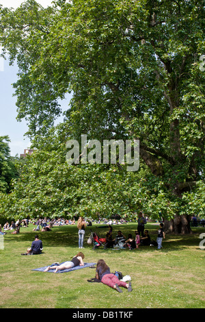 Plane tree and people relaxing. Brunswick Square, Bloomsbury, Camden, London, England - Stock Photo