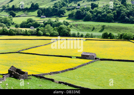 Barns and Dry Stone Walls in Meadows at Gunnerside Swaldele Yorkshire Dales England - Stock Photo