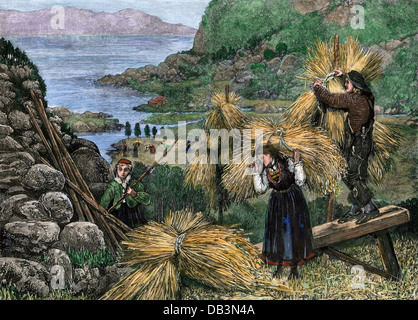 Harvesting a mountain field in Norway, 1880s.  Hand-colored woodcut - Stock Photo